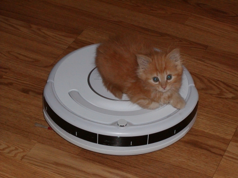 Update On The Help Ari Buy Her Kitty A Roomba Perfume