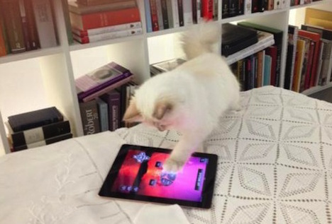 Choupette must love Pokemon Go so hard.
